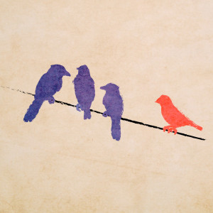 three blue birds together with one red bird to the side